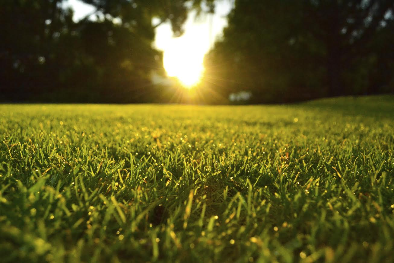 Tampa Bay Turf Products